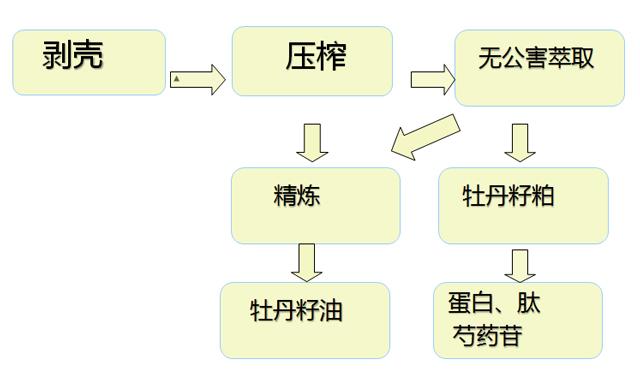 牡丹籽油怎么加工?麟源分享牡丹籽油加工流程图