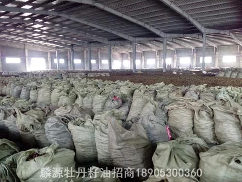 牡丹籽油批发选高科牡丹牡丹籽油批发厂家的3个上风